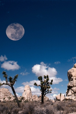 Desert Moon And Desert