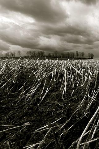 Farm Black And White Crop Field
