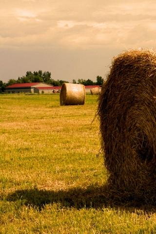 Farm Hay Bales