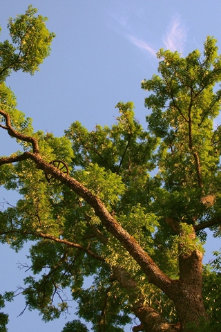 Garden Gree Tree Branches And Sky