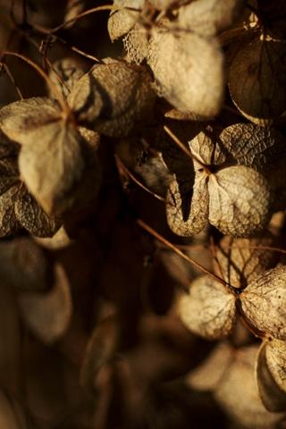 Garden Strange Brown Leaves