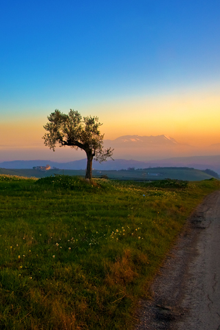 Natural Tree And The Sunset