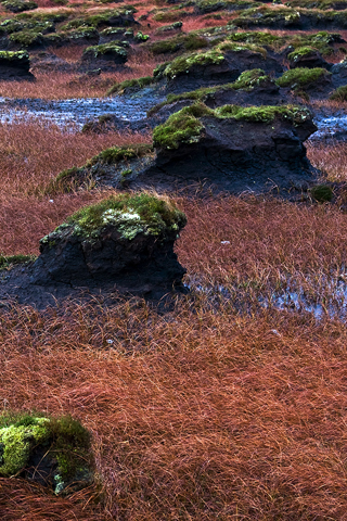 Rural Bogfield Donegal