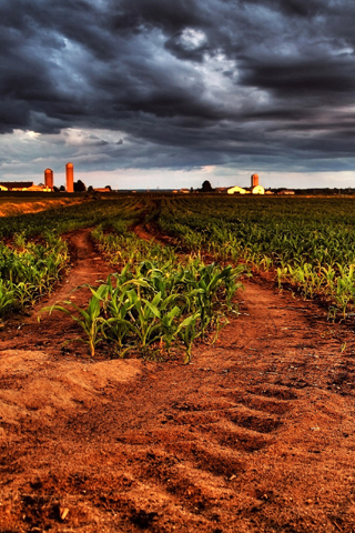 Rural Corns Unset