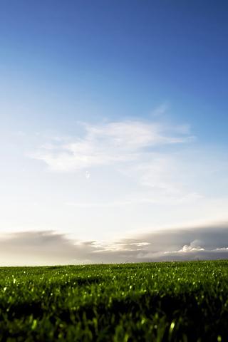 Rural Green Fields Of Sweden