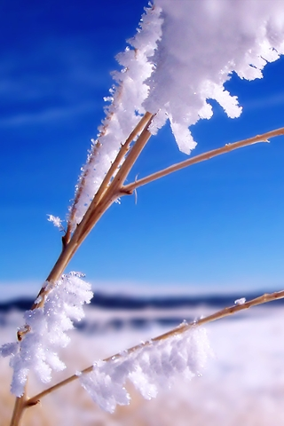 Snowy Snow Covered Plant Close Up