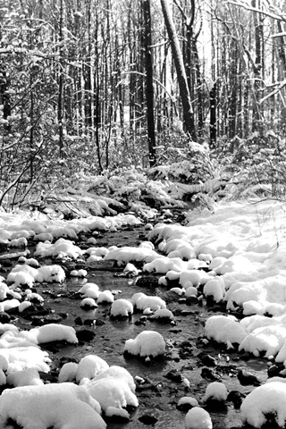 Snowy Snowy Forest Stream