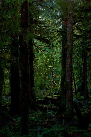 Woodland Dark Woods