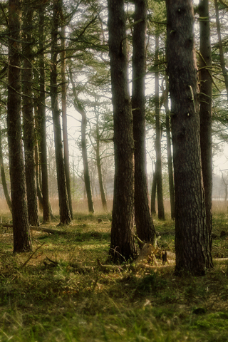 Woodland Dream Forest