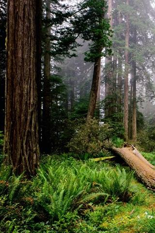 Woodland Misty Woodland