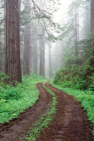 Woodland Muddy Trail Through Forest