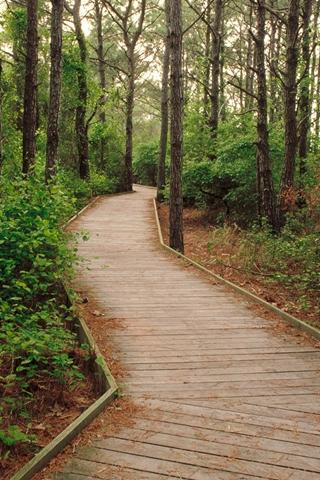 Woodland Wooden Path Through Forest