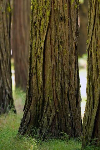 Woodland Yosemite Woods
