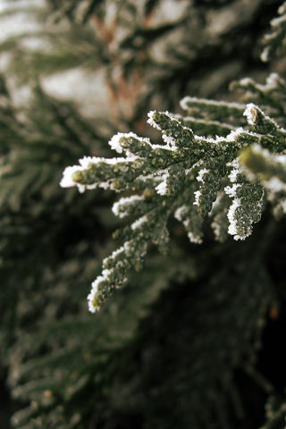 Close Up A Green Winter