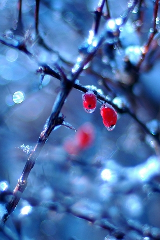 Close Up Frozen Red Berries