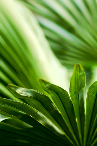 Close Up Leaves