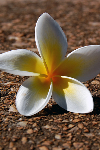 Flower Fallen Flower