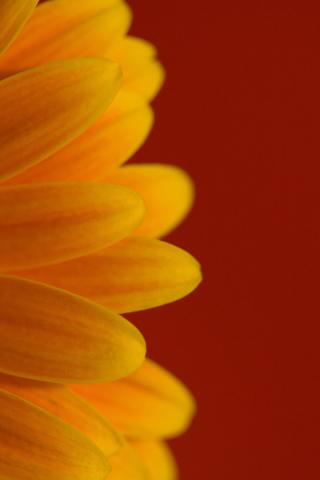 Flower Simple Colors