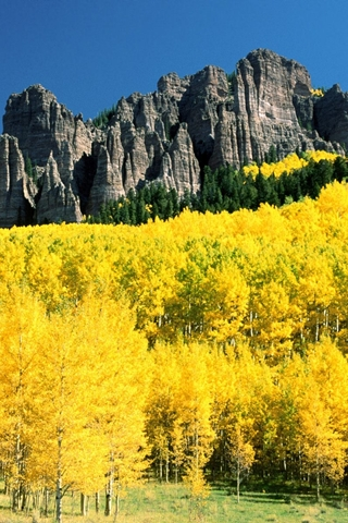 Mountain Golden Yellow Forest And Mountainous Cragg