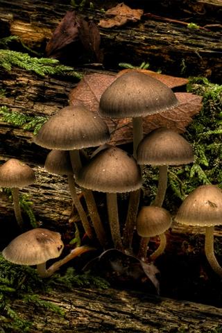 Mushroom Mushrooms At Jubilee Nature Trail Park