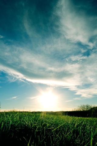 Sunset Grassy Sunset