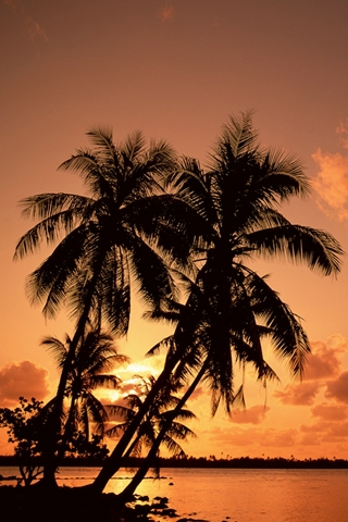 Tropical Palm Trees Silhouetted At Sunset