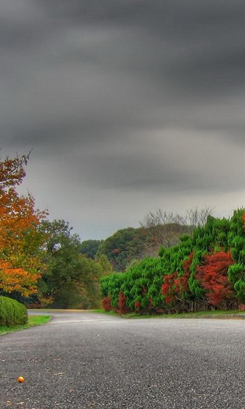 Autumn Autumn Path