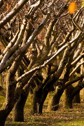 Autumn Autumn Trees