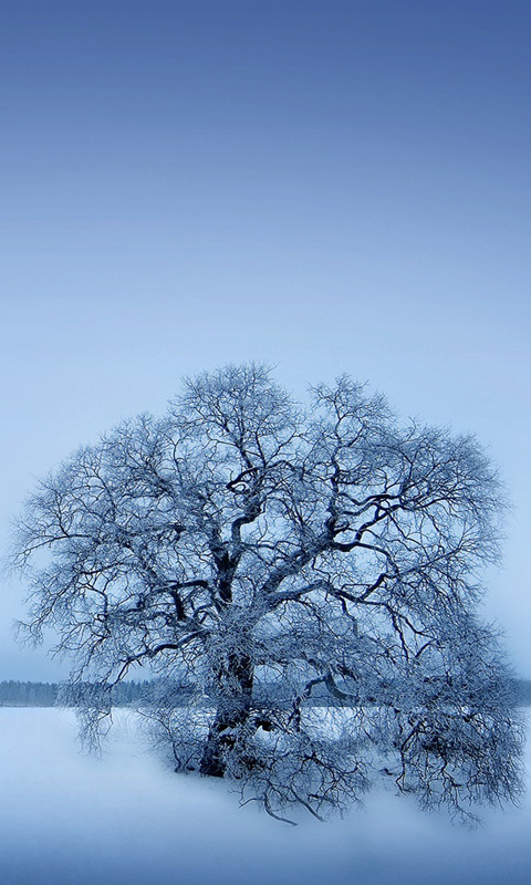 Winter Winter Tree