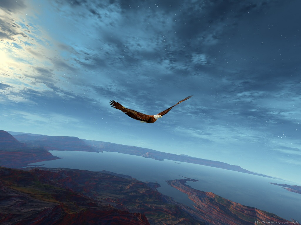 Flying At The Edge Of The World Birds Wallpaper
