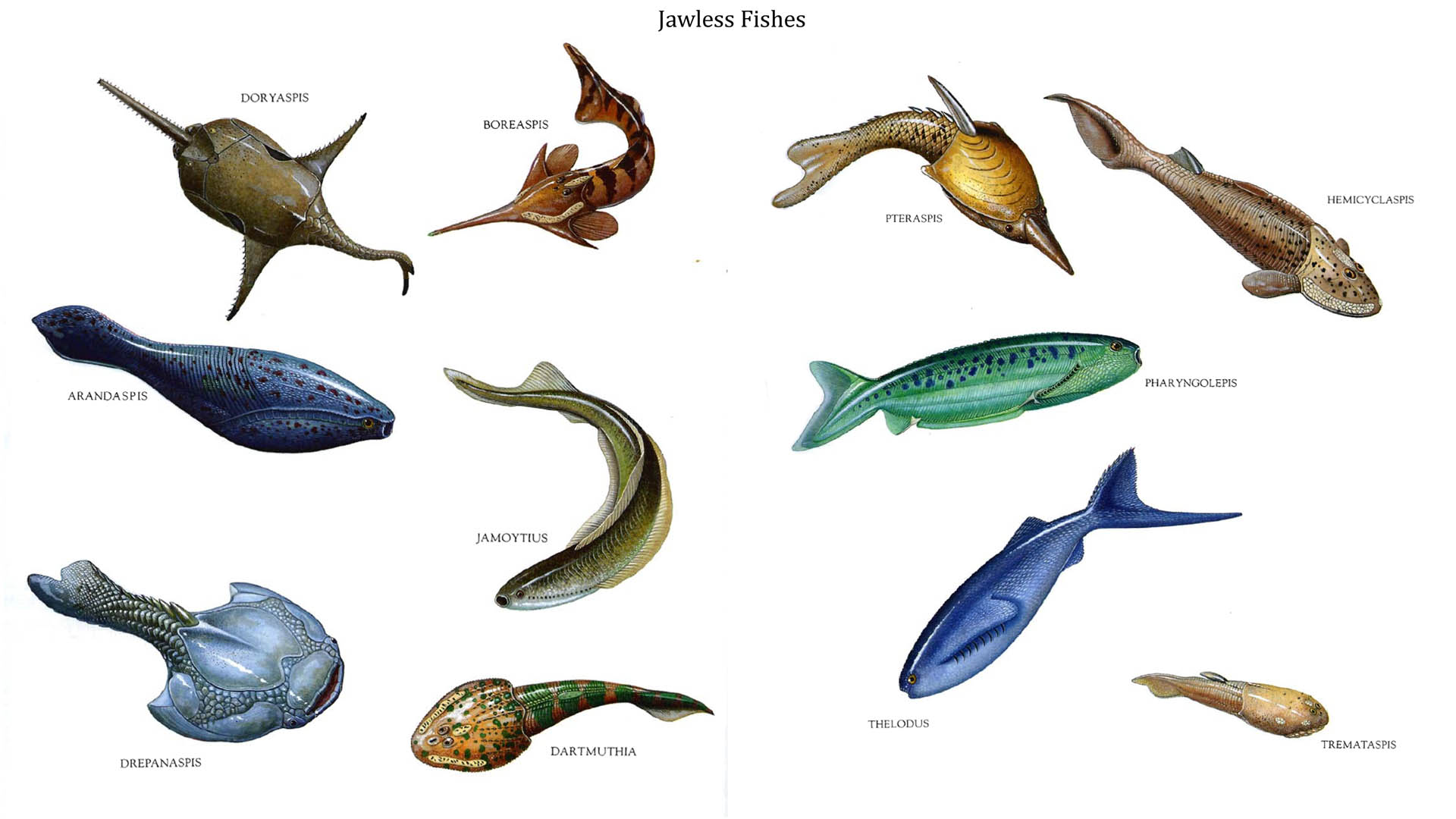Jawless Fishes